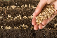 planting seeds and living generously