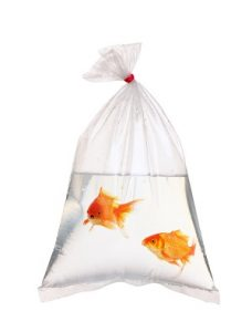 don't pick too small of a niche like goldfish breeding